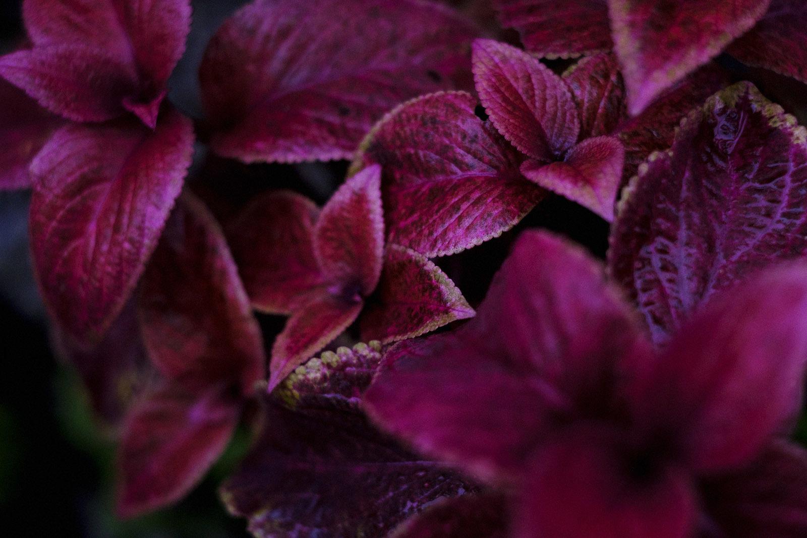 秋になったら写真を撮ろうと思っていたけれど…(12)_e0367501_13590559.jpg