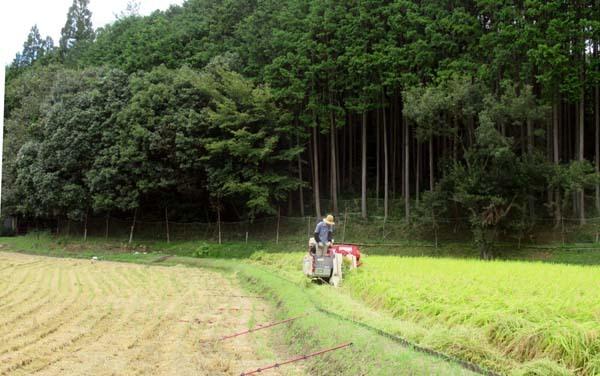 岩倉の稲刈り_e0048413_18290563.jpg