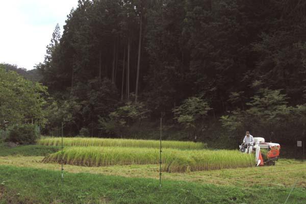 岩倉の稲刈り_e0048413_18291200.jpg