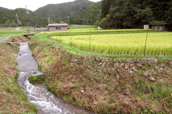 岩倉の稲刈り_e0048413_18291547.jpg