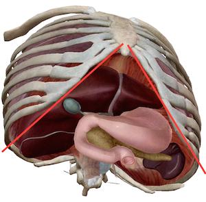 秋の肝臓疲労は「均整センター」で解消できます 〜ある日の施術より〜_e0073240_07561323.jpg