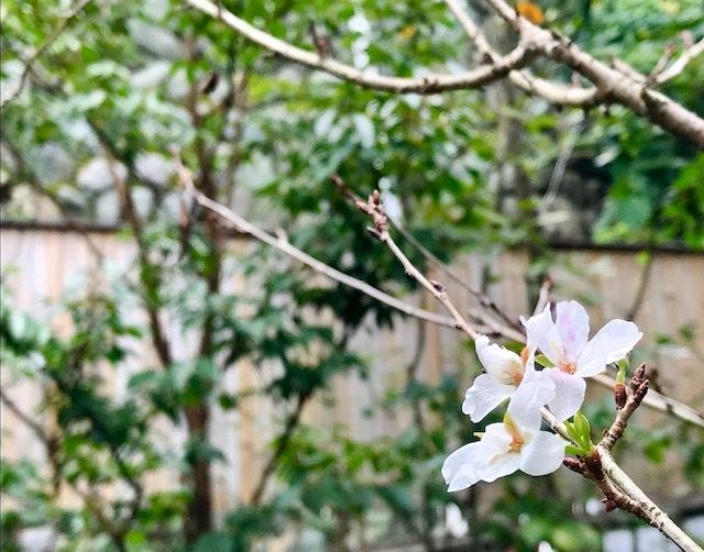 秋の桜_e0170562_21301405.jpg