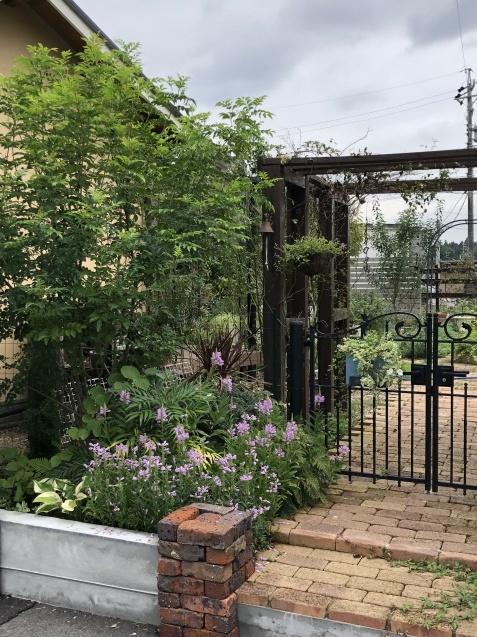 庭入り口の「トラノオ」_a0243064_20184107.jpg