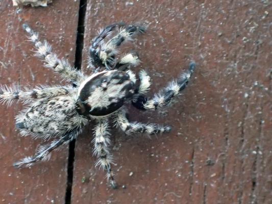 ベルダのクモたち No.2_f0131669_10420352.jpg