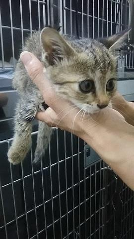【犬猫・移動先募集】子猫たち、小型犬、老犬(9/15訪問)_f0242002_19582998.jpg