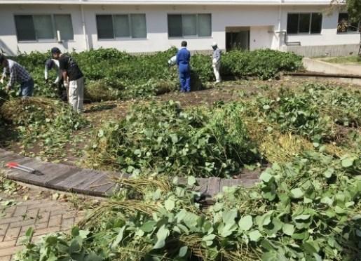 3か月ぶり キャンパスの清掃活動開始_a0346704_20013965.jpg