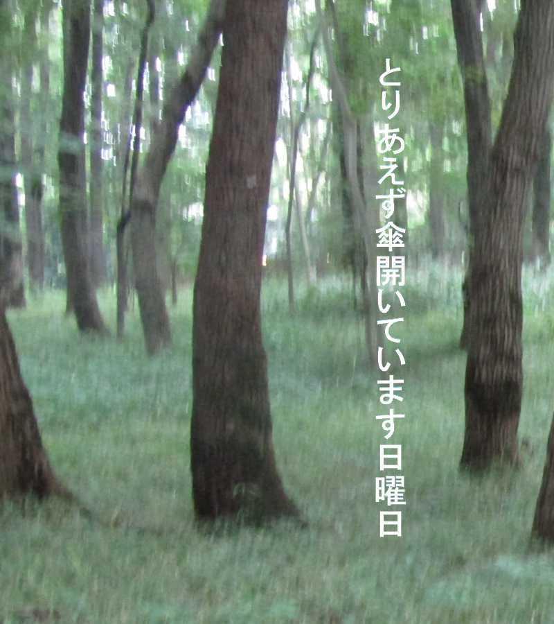 f0117041_06073168.jpg