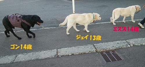 f0082103_15342683.jpg
