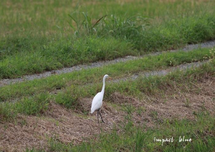 ちょっと遠出した、大きな大きな沼にて(^^)/_a0355908_19585502.jpg