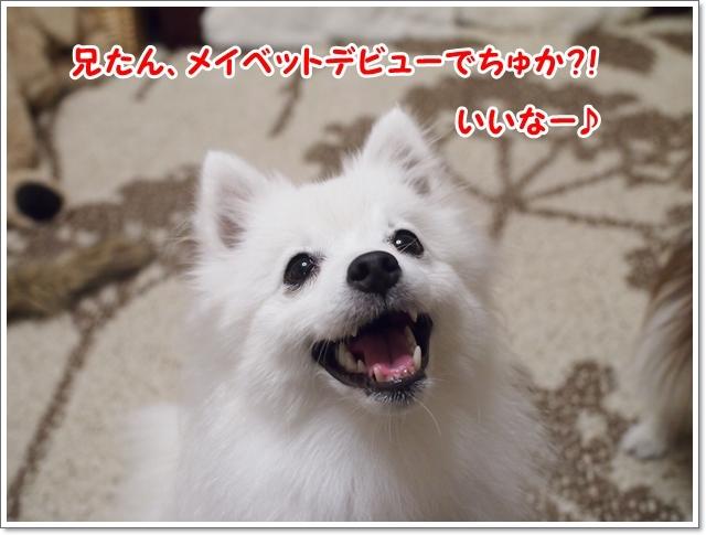 d0013149_00075752.jpg