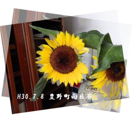 a0212557_15075132.jpg