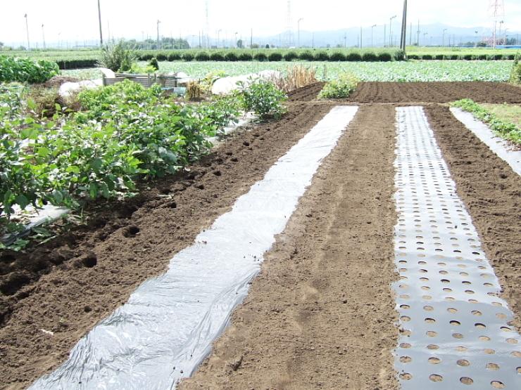 白菜、玉ねぎ用の畝がやっと完成_d0225575_23123881.jpg