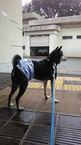 【犬猫・移動先募集】子猫たち、小型犬、老犬(9/15訪問)_f0242002_23045597.jpg