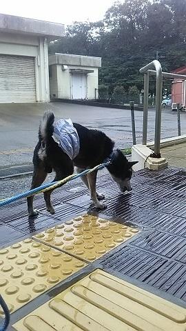 【犬猫・移動先募集】子猫たち、小型犬、老犬(9/15訪問)_f0242002_23050104.jpg