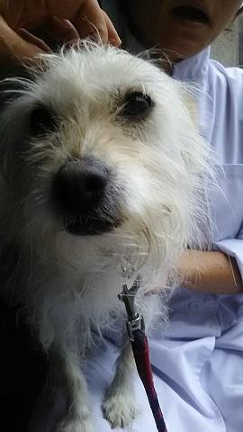 【犬猫・移動先募集】子猫たち、小型犬、老犬(9/15訪問)_f0242002_23084130.jpg