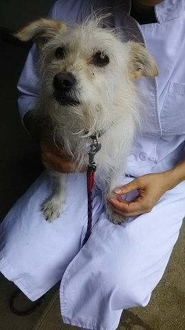 【犬猫・移動先募集】子猫たち、小型犬、老犬(9/15訪問)_f0242002_23084609.jpg