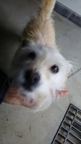 【犬猫・移動先募集】子猫たち、小型犬、老犬(9/15訪問)_f0242002_23110102.jpg