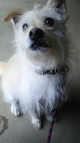 【犬猫・移動先募集】子猫たち、小型犬、老犬(9/15訪問)_f0242002_23111917.jpg