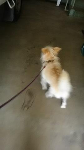 【犬猫・移動先募集】子猫たち、小型犬、老犬(9/15訪問)_f0242002_23131150.jpg