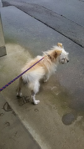 【犬猫・移動先募集】子猫たち、小型犬、老犬(9/15訪問)_f0242002_23132528.jpg