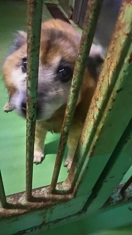 【犬猫・移動先募集】子猫たち、小型犬、老犬(9/15訪問)_f0242002_23150446.jpg