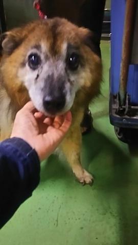 【犬猫・移動先募集】子猫たち、小型犬、老犬(9/15訪問)_f0242002_23151240.jpg