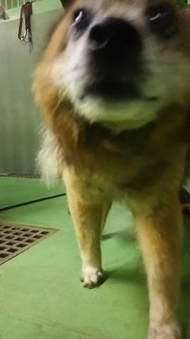 【犬猫・移動先募集】子猫たち、小型犬、老犬(9/15訪問)_f0242002_23151840.jpg