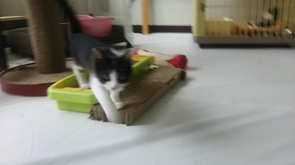 【犬猫・移動先募集】子猫たち、小型犬、老犬(9/15訪問)_f0242002_23181835.jpg