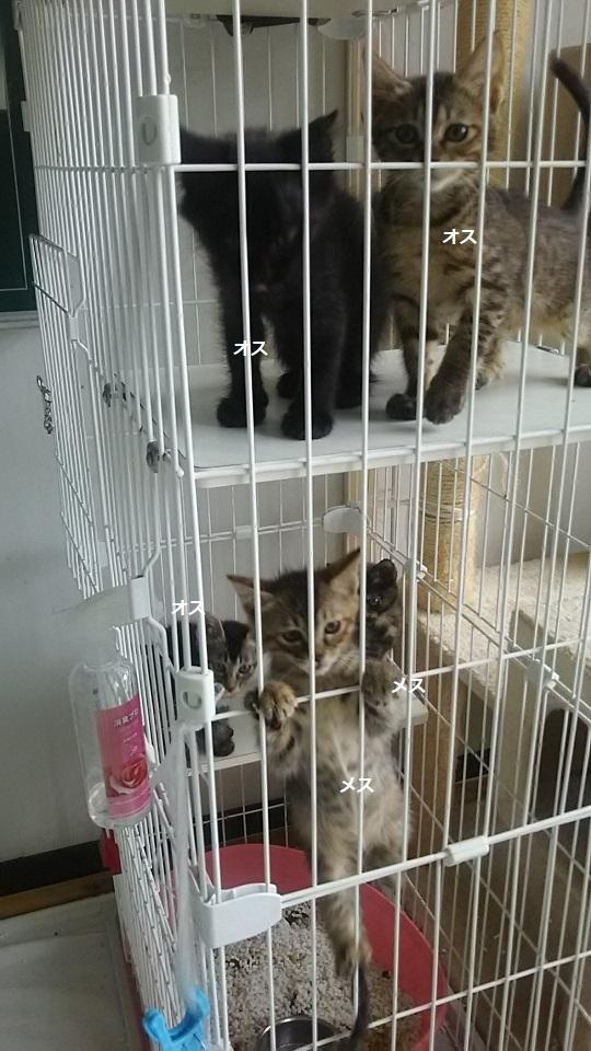 【犬猫・移動先募集】子猫たち、小型犬、老犬(9/15訪問)_f0242002_23250853.jpg