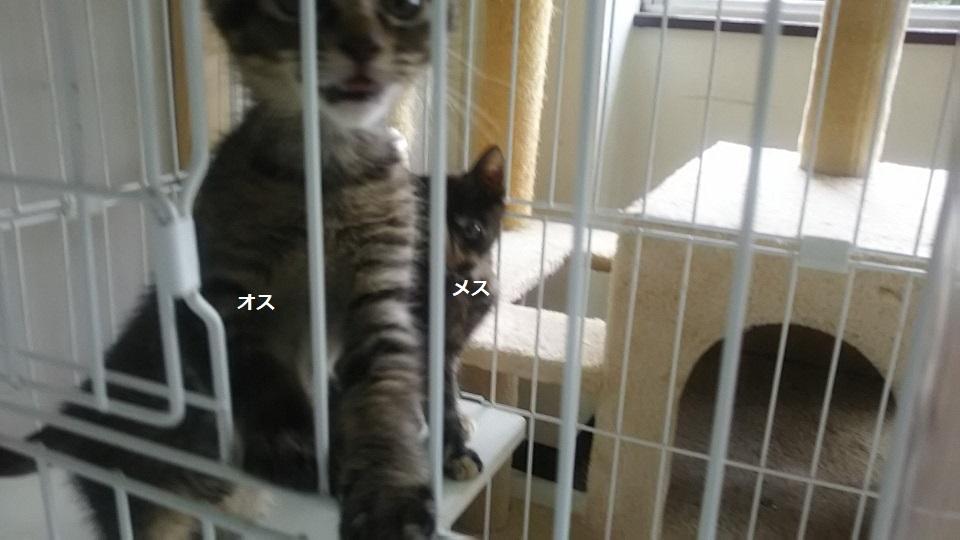 【犬猫・移動先募集】子猫たち、小型犬、老犬(9/15訪問)_f0242002_23251908.jpg