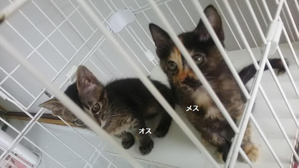 【犬猫・移動先募集】子猫たち、小型犬、老犬(9/15訪問)_f0242002_23254493.jpg