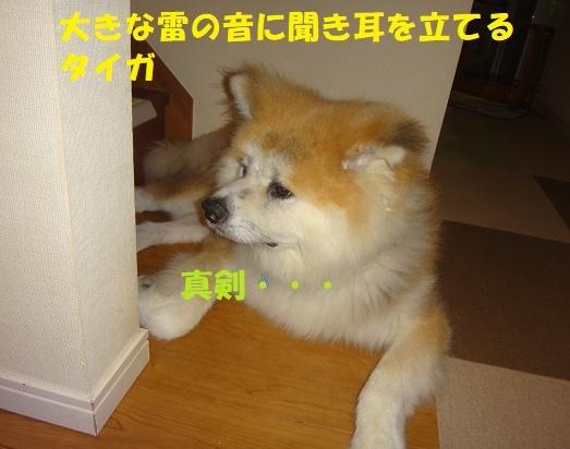 f0121712_00144812.jpg