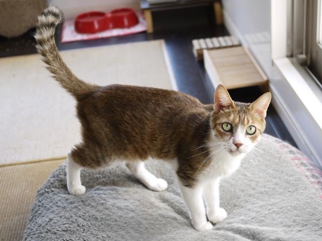猫のお留守番 ウィンクくん編。_a0143140_21372954.jpg