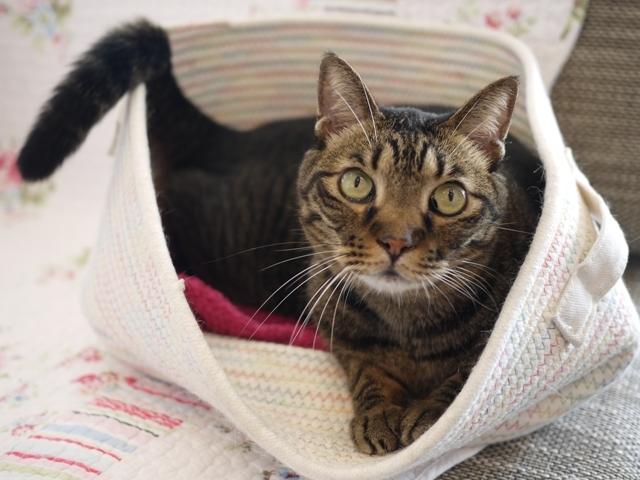 猫のお留守番 ララちゃん編。_a0143140_21401091.jpg
