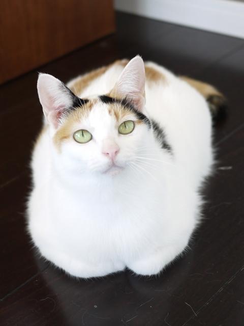 猫のお留守番 エンジェルちゃん編。_a0143140_21471426.jpg