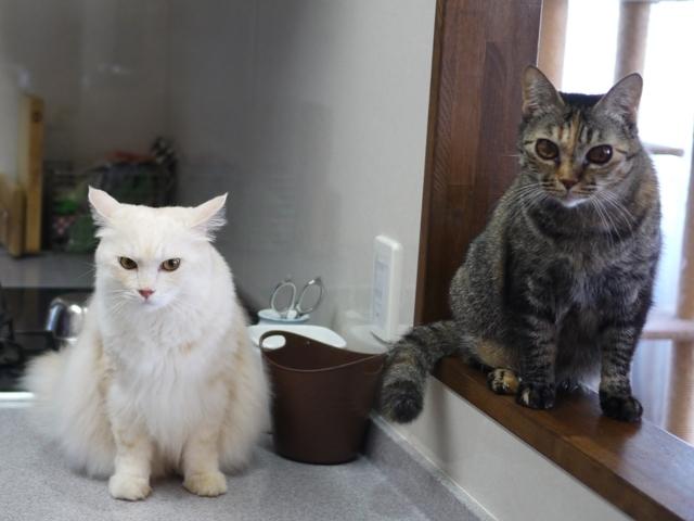 猫のお留守番 天ちゃん麦くん茶くん〇くん編。_a0143140_21505563.jpg