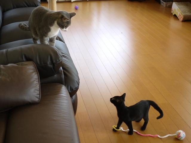 猫のお留守番 天ちゃん麦くん茶くん〇くん編。_a0143140_21514502.jpg