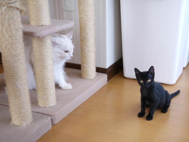 猫のお留守番 天ちゃん麦くん茶くん〇くん編。_a0143140_21521691.jpg