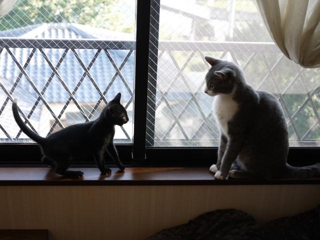 猫のお留守番 天ちゃん麦くん茶くん〇くん編。_a0143140_21525108.jpg