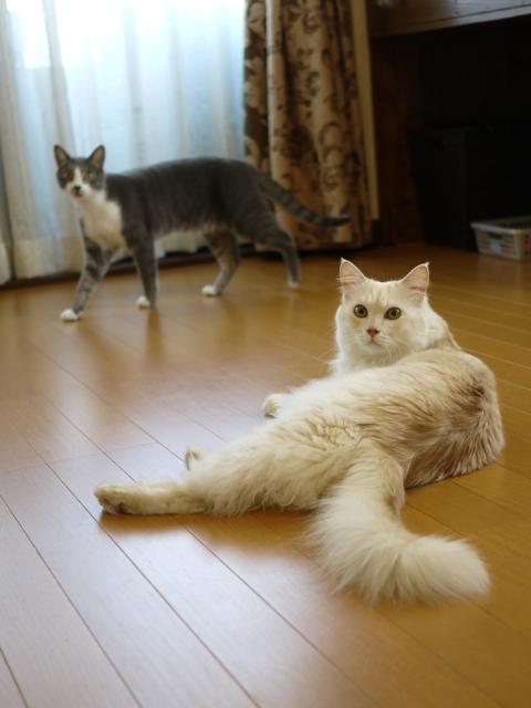 猫のお留守番 天ちゃん麦くん茶くん〇くん編。_a0143140_21554933.jpg