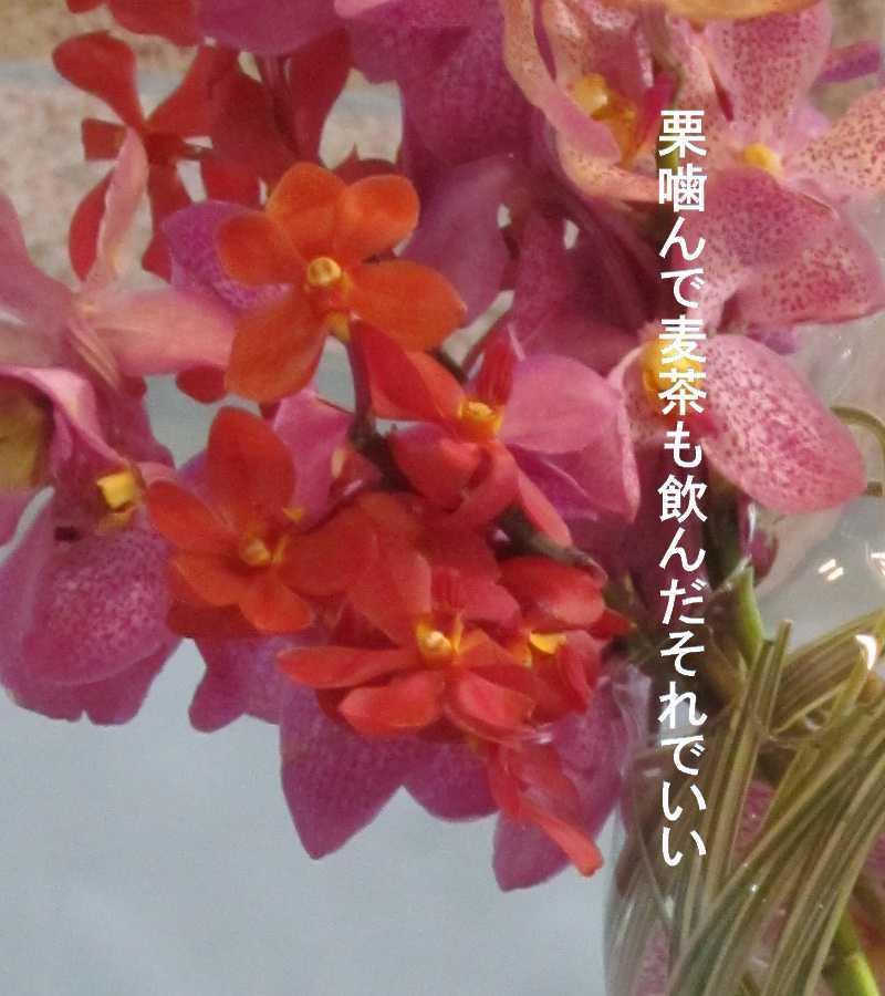 f0117041_06472642.jpg