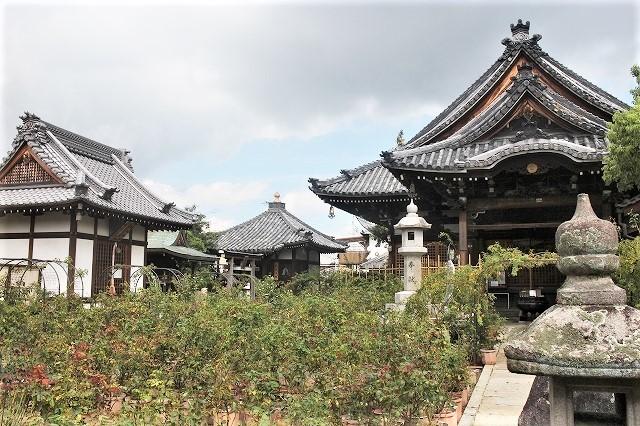 本薬師寺のホテイアオイと今井町ウオーク_b0044663_15140622.jpg