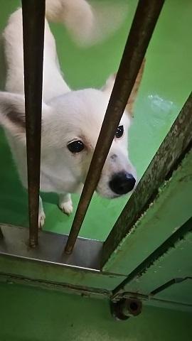 【犬猫・移動先募集】子猫たち、小型犬、老犬(9/15訪問)_f0242002_10081631.jpg