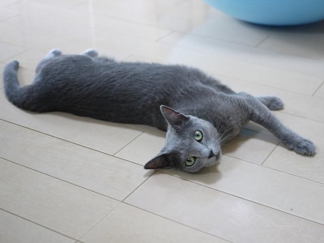 猫のお留守番 ルウちゃん編。_a0143140_22353513.jpg