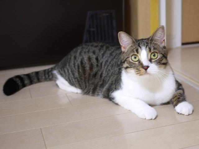 猫のお留守番 コムギくん編。_a0143140_22382513.jpg