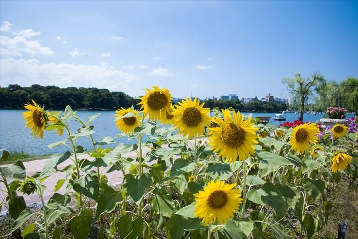 福岡旅行 舞鶴公園と大濠公園_e0170058_19265954.jpg