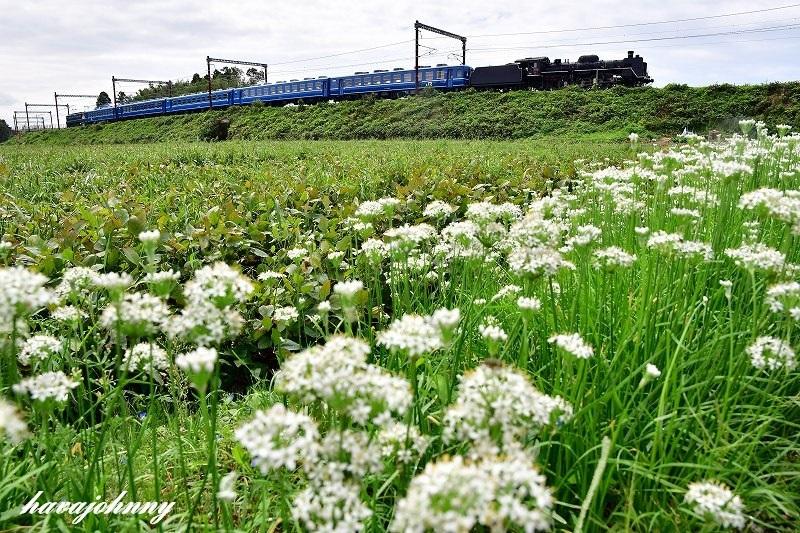 白い花に群がるおじさん達_c0173762_17492909.jpg