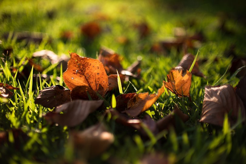 Warm Colors Cuddling Up To Early Autumn\'s Melancholy_d0353489_22354158.jpg