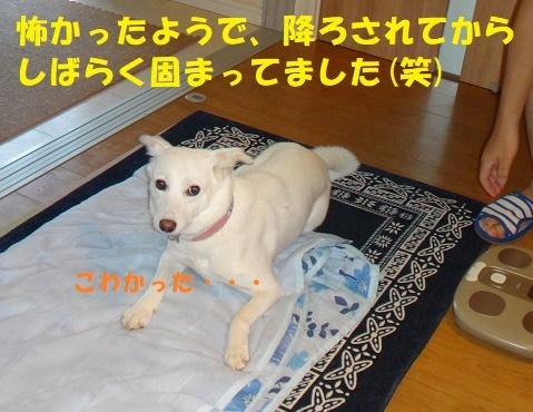f0121712_08302631.jpg