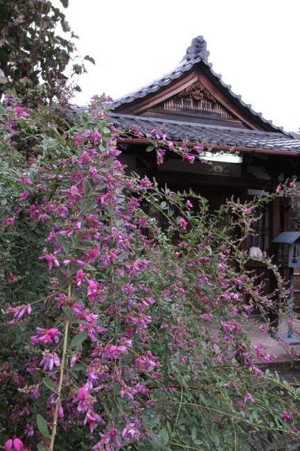 萩の寺 常林寺 盛り_e0048413_17525762.jpg